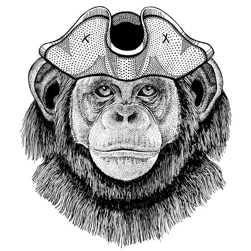 Szympans, Małpi jest ubranym pirata tricorn kapelusz Capitan kostium ilustracja wektor
