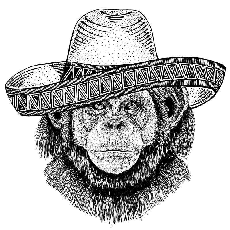 Szympans małpa jest ubranym tradycyjnego meksykańskiego kapelusz Klasyczny pi?ropusz, fiesta, przyj?cie royalty ilustracja