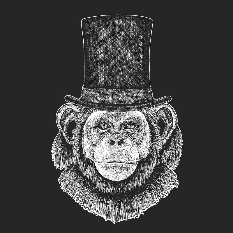 Szympans, małpa Odgórny kapelusz, butla Modnisia zwierzę, dżentelmen Klasyczny pióropusz Drukuje dla dzieci koszulki, dzieciaki royalty ilustracja