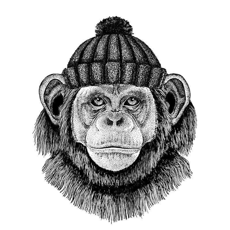 Szympansa Małpi Chłodno zwierzę jest ubranym trykotowego zima kapelusz Ciepła pióropuszu beanie bożych narodzeń nakrętka dla tatu ilustracja wektor