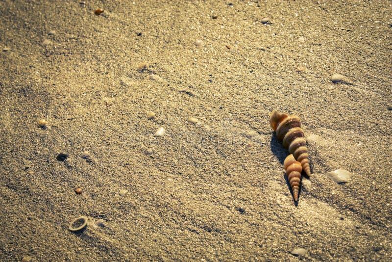 Szyszkowi seashells na plaży obrazy royalty free