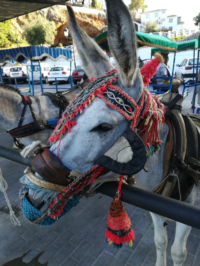Táxi da mula na vila de Mijas imagem de stock royalty free