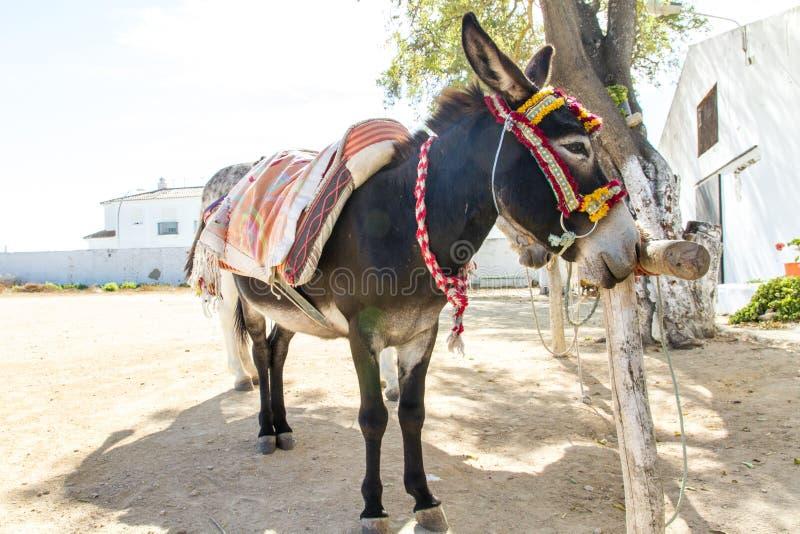 Táxi usado andaluso do anúncio do Burro - imagem - foto foto de stock royalty free