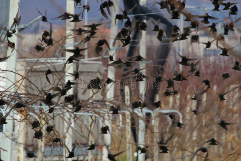 Tão muitos pássaros de voo fotografia de stock