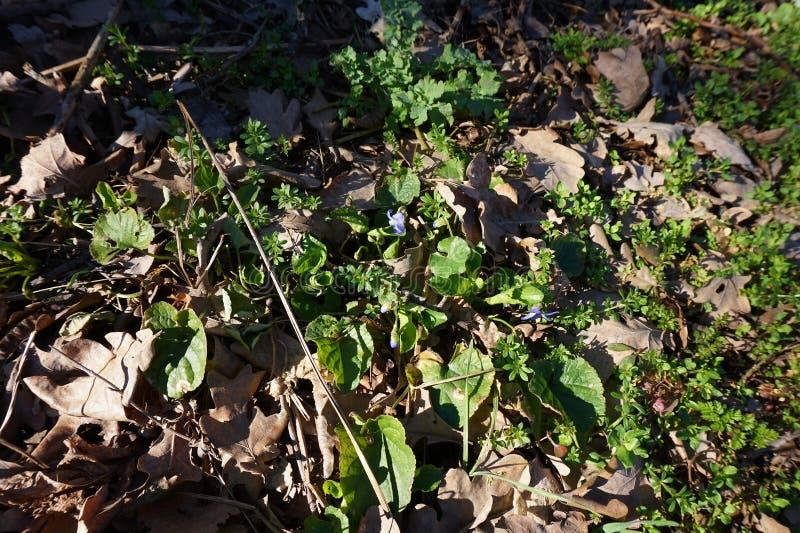 Täckt med grön mossa- eller barngräsjordning arkivfoto