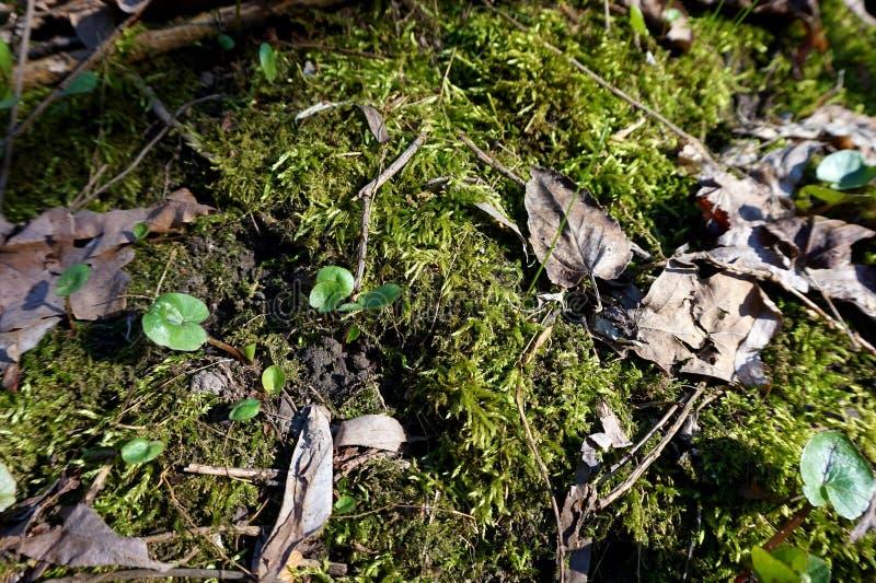 Täckt med grön mossa- eller barngräsjordning royaltyfria foton