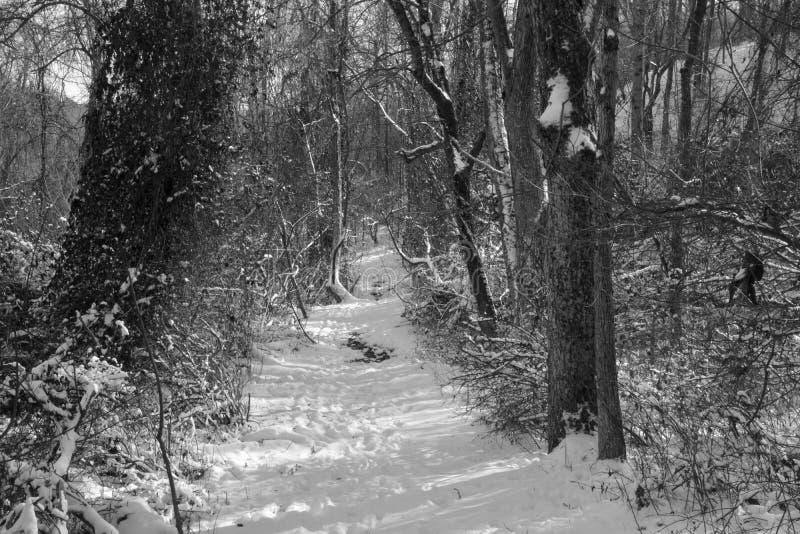 Täckt snö fotvandra slingan royaltyfri fotografi