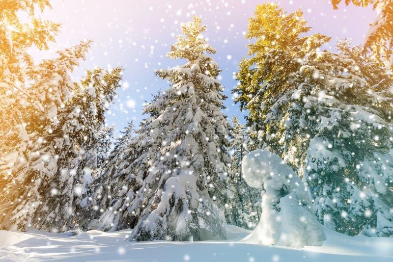 Täckt snö sörjer träd och den fallande insnöade bergskogen i s arkivfoto