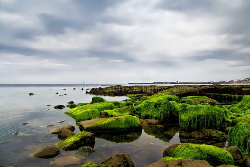 Täckte alger vaggar på Lyme Regis arkivfoton
