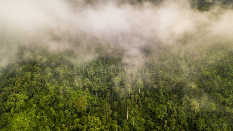 Täckte den tropiska rainforesten för den flyg- sikten, dimma berg i vändkretsen arkivfoto