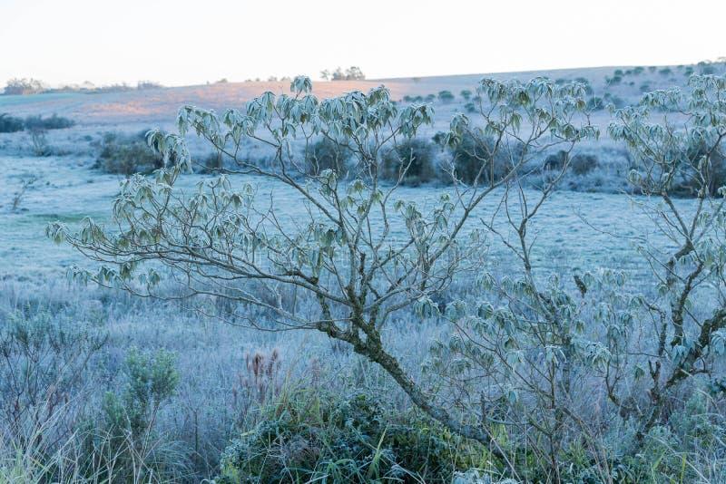 Is-täckte fält royaltyfria foton