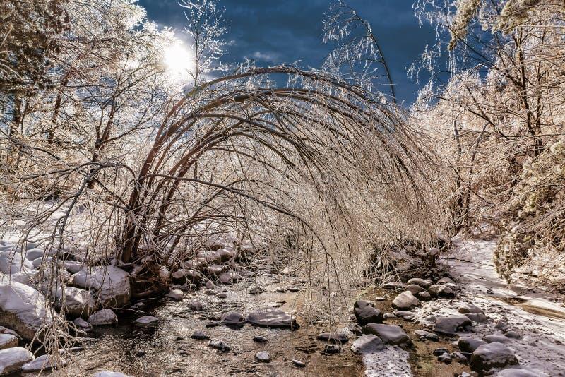 Is täckte fryste Forest Landscape arkivfoto