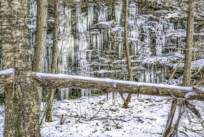 Is-täckte klippa och träd i vinter royaltyfria bilder