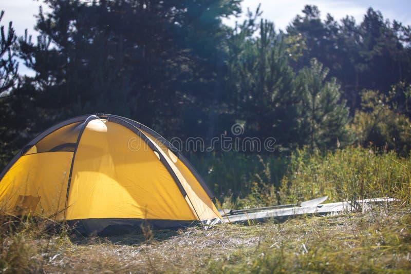 Tält i skogen i ljuset av de sol-, guling- och gräsplantälten arkivfoton