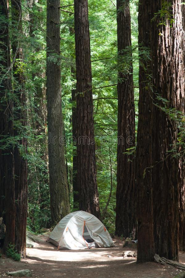 Tältplats och tält på den stora handfatredwoodträddelstatsparken royaltyfri fotografi