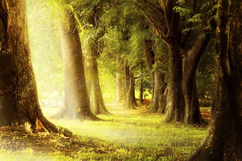 Tänd till och med springorna av träden i skogen royaltyfri fotografi