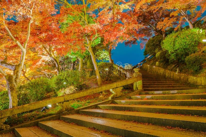 tänd upp laser-showen på härlig arkitektur i Kiyomizu-dera T arkivfoton