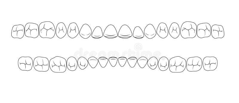 Tänder av klyftor vektor illustrationer
