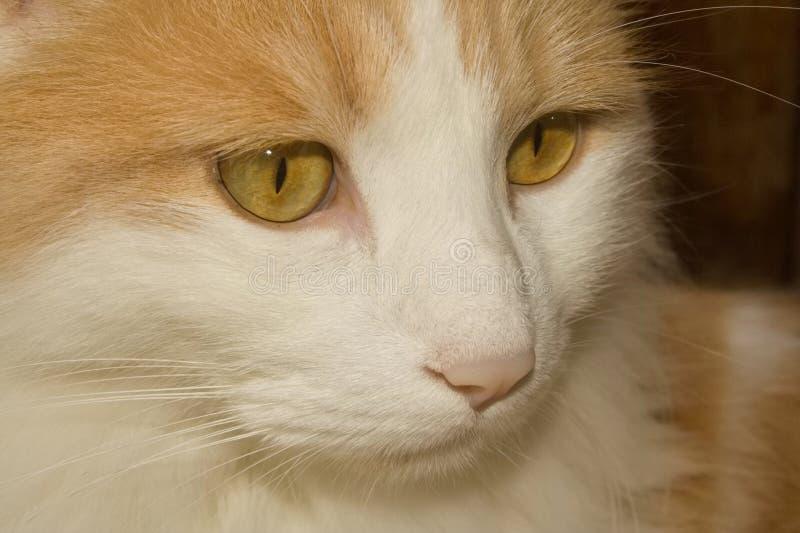 Tänkande katt arkivfoton