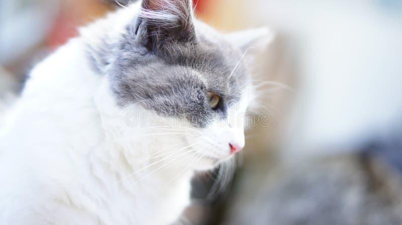 Tänkande katt fotografering för bildbyråer