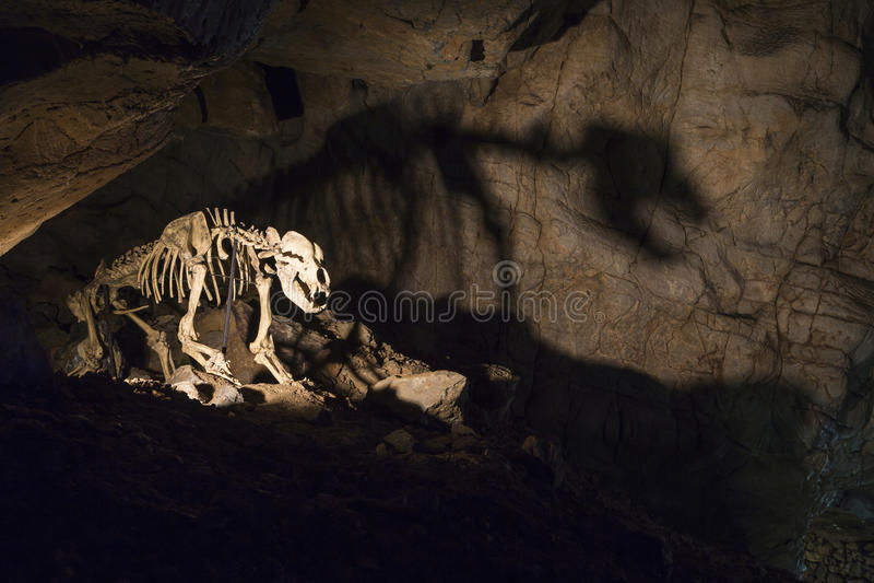 Tänt grottabjörnskelett i grotta arkivbild