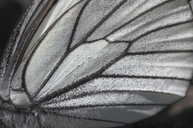 tät övre vinge för fjäril arkivfoto