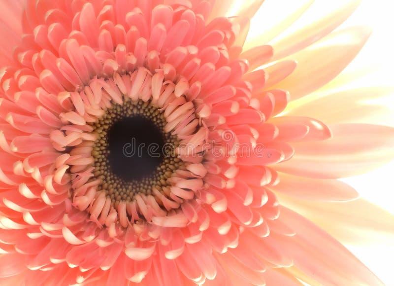 Download Tät blommapink upp arkivfoto. Bild av blom, green, härlig - 244234