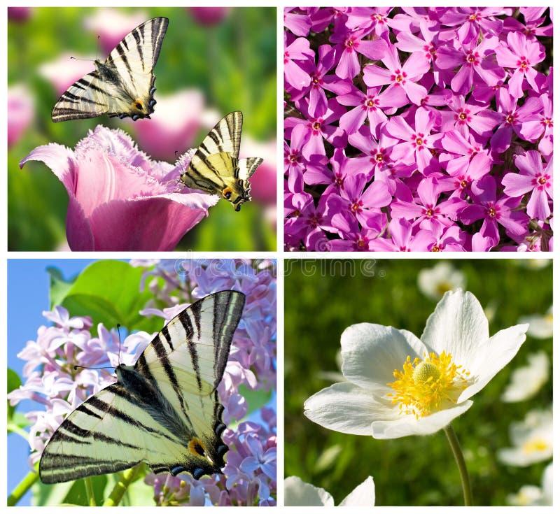 tät collage blommar lilan upp white royaltyfria foton