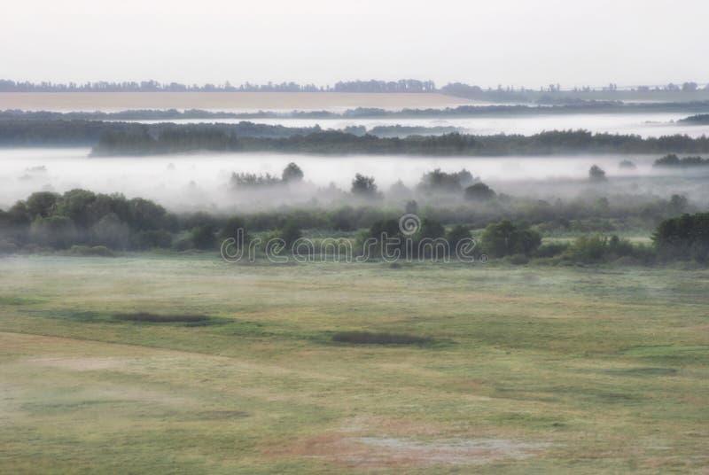 Tät dimma över sommarmorgon sätter in ängar och skogar royaltyfri bild