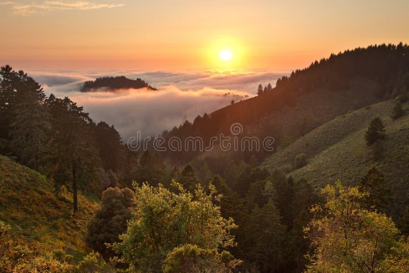 Tät dimma över Stilla havet i kust- Kalifornien royaltyfri fotografi