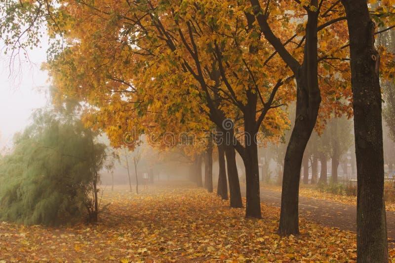 Tät dimma i staden Dimma döljer landskapet Otta i Kyiv arkivbild