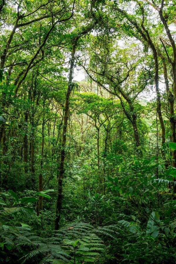 Tät djungel med många träd arkivfoto