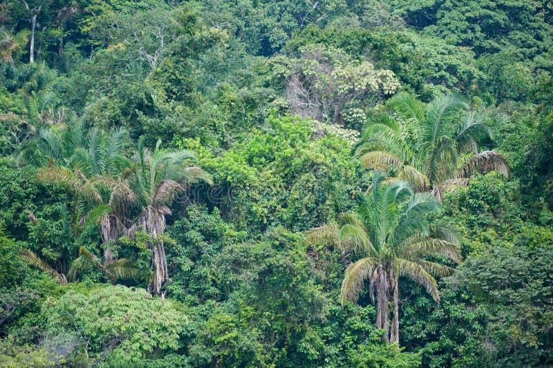 tät djungelvegetation royaltyfri bild