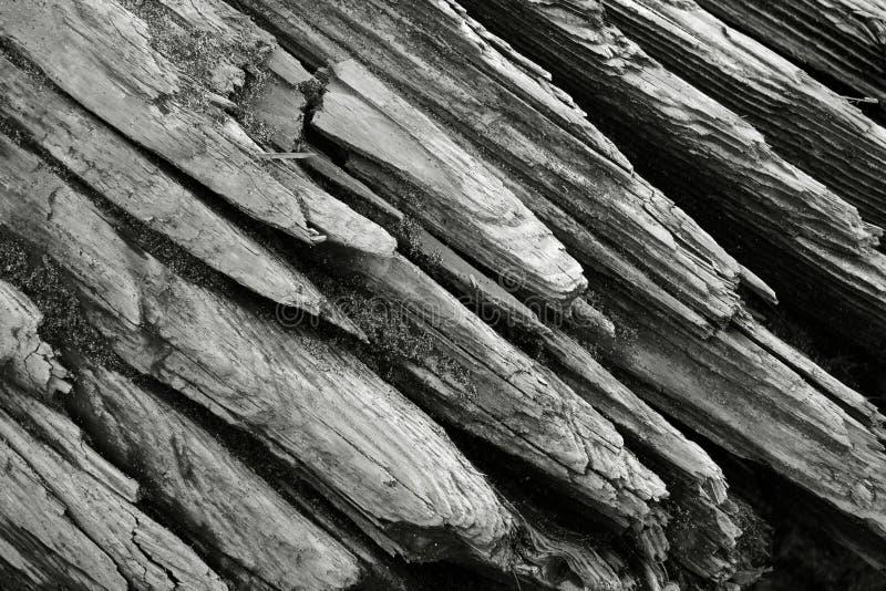tät driftwood upp royaltyfria bilder