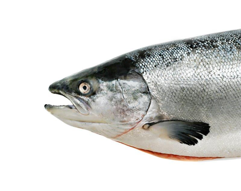 tät fisk isolerad lax upp arkivfoto