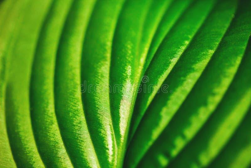 tät grön leaf upp arkivbilder
