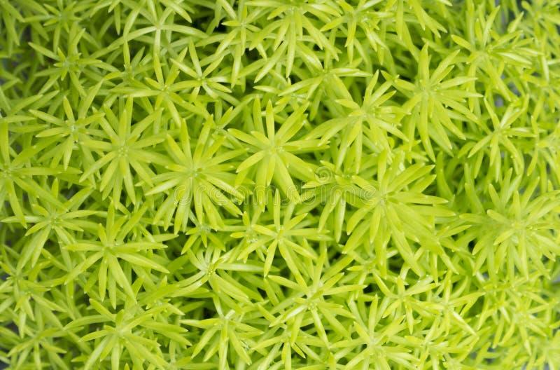 tät grön växt upp royaltyfri fotografi