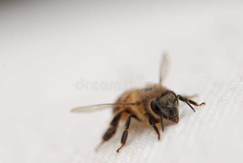 tät honung för bi upp arkivfoto