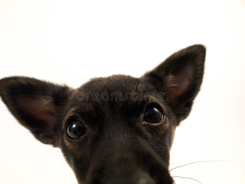 tät hund upp arkivfoto