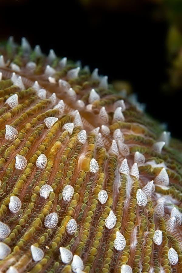 tät korall hårda indonesia sulawesi upp royaltyfri bild