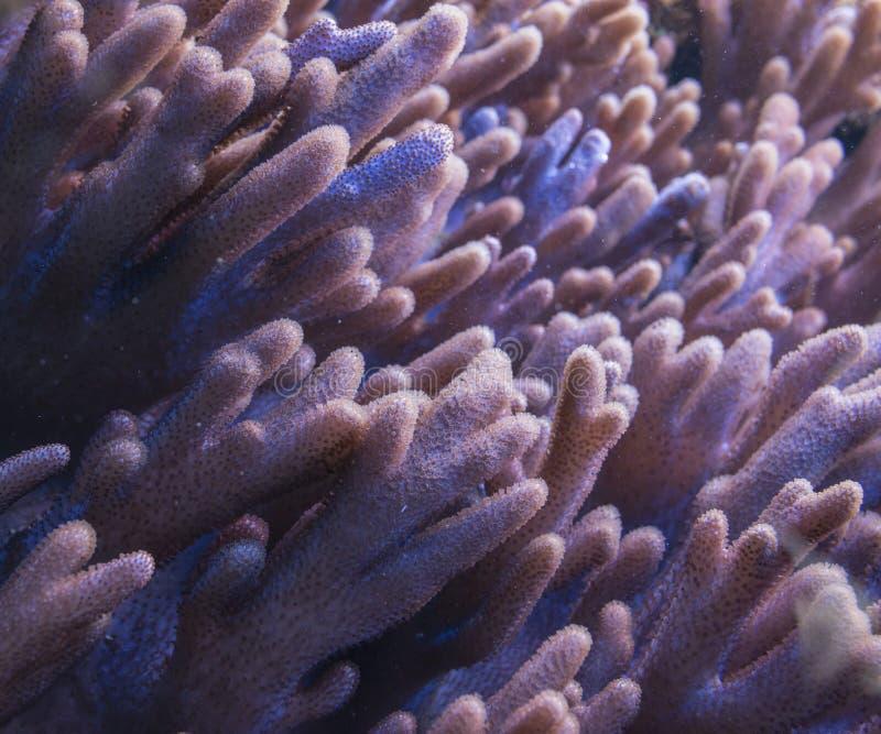 tät korall upp royaltyfria bilder