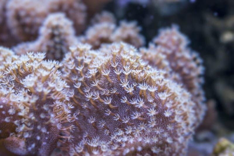 tät korall upp royaltyfri foto