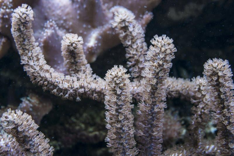 tät korall upp arkivbilder