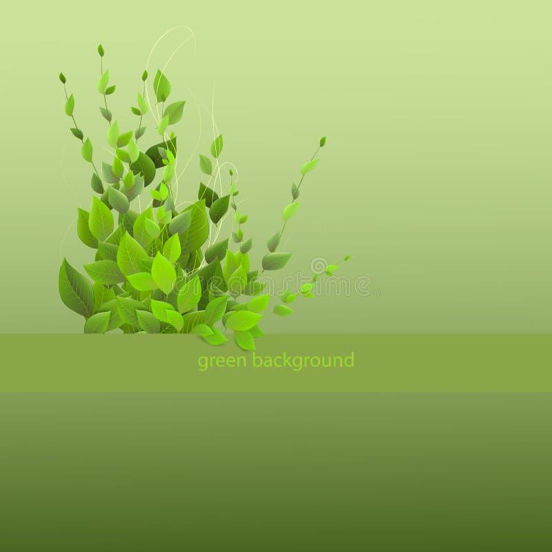 Tät lövverk, buske på en grön bakgrund som klättrar växter, ve arkivfoton