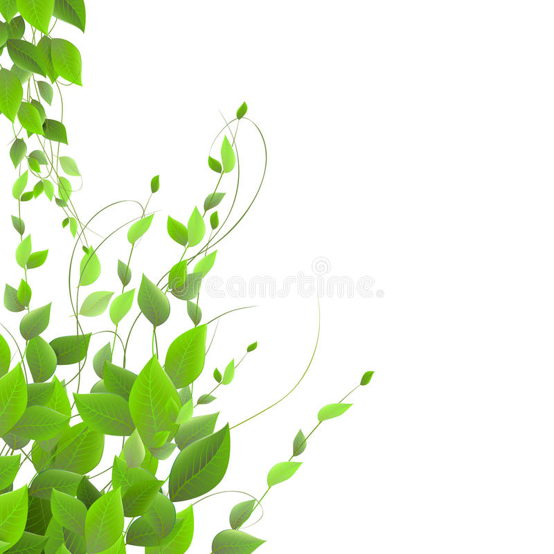 Tät lövverk på en vit bakgrund som klättrar växter, vektor royaltyfria foton