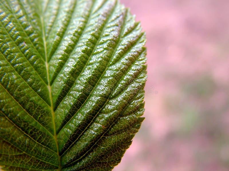 Tät Leaf Upp Arkivbilder