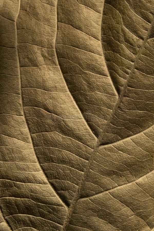 tät leafväxt upp arkivfoto