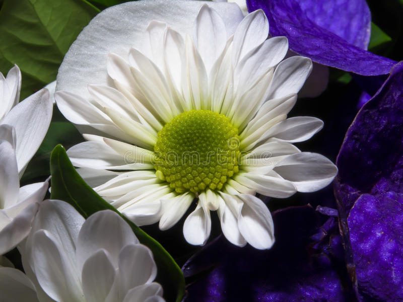 tät mörk blommaorchid för bakgrund upp arkivfoto