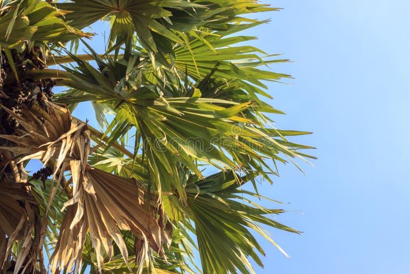 tät palmträd upp royaltyfri foto