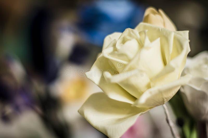 tät rose övre white arkivbilder